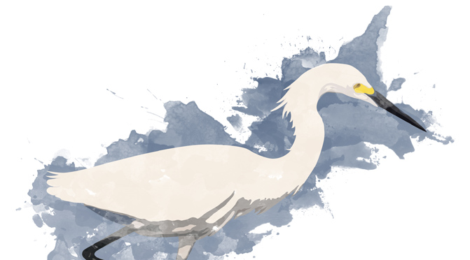 Snowy Egret – Watercolor Style